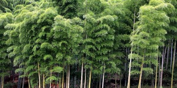 Zijn bamboe vlonderplanken milieuvriendelijk?