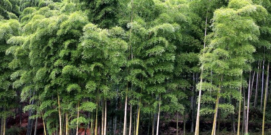 Les lames de terrasse en bambou sont-elles écologiques ?