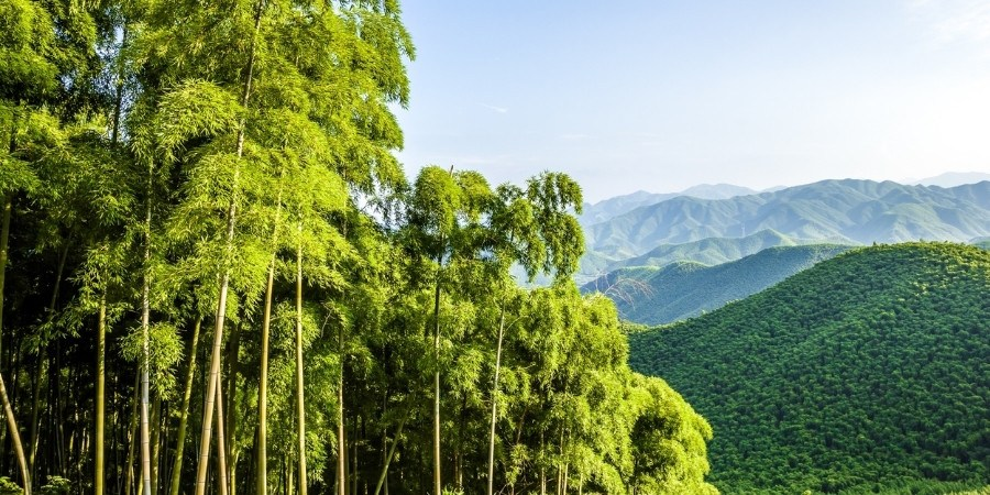 Sustainable production of bamboo at MOSO®