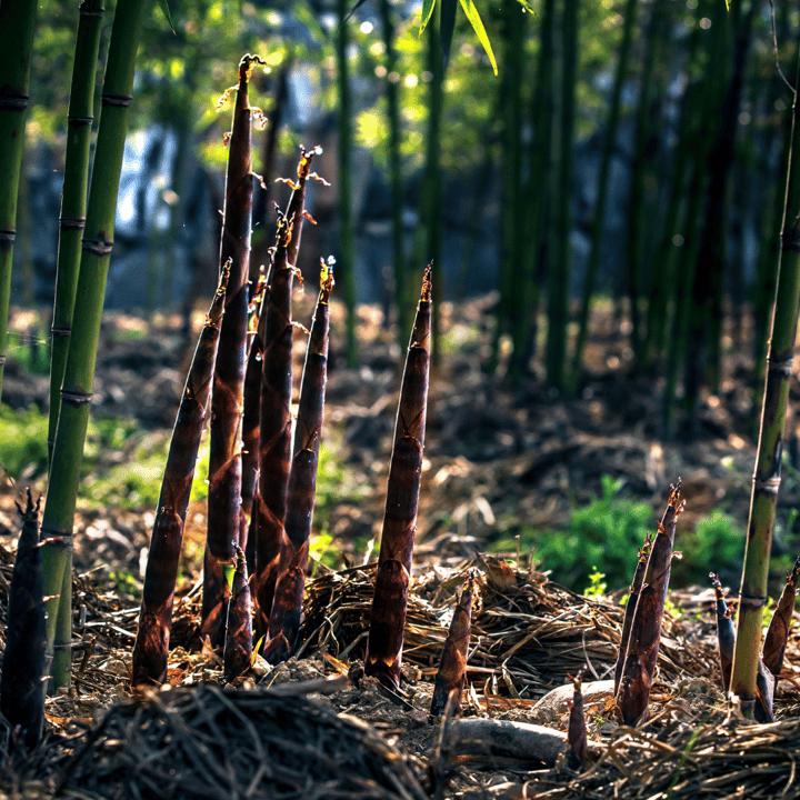 bamboemateriaal milieuvoordelen
