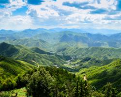 Quelle est la quantité de CO2 stockée dans le bambou ?